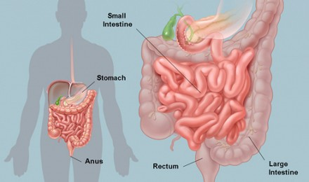 Information about Colonic Irrigation